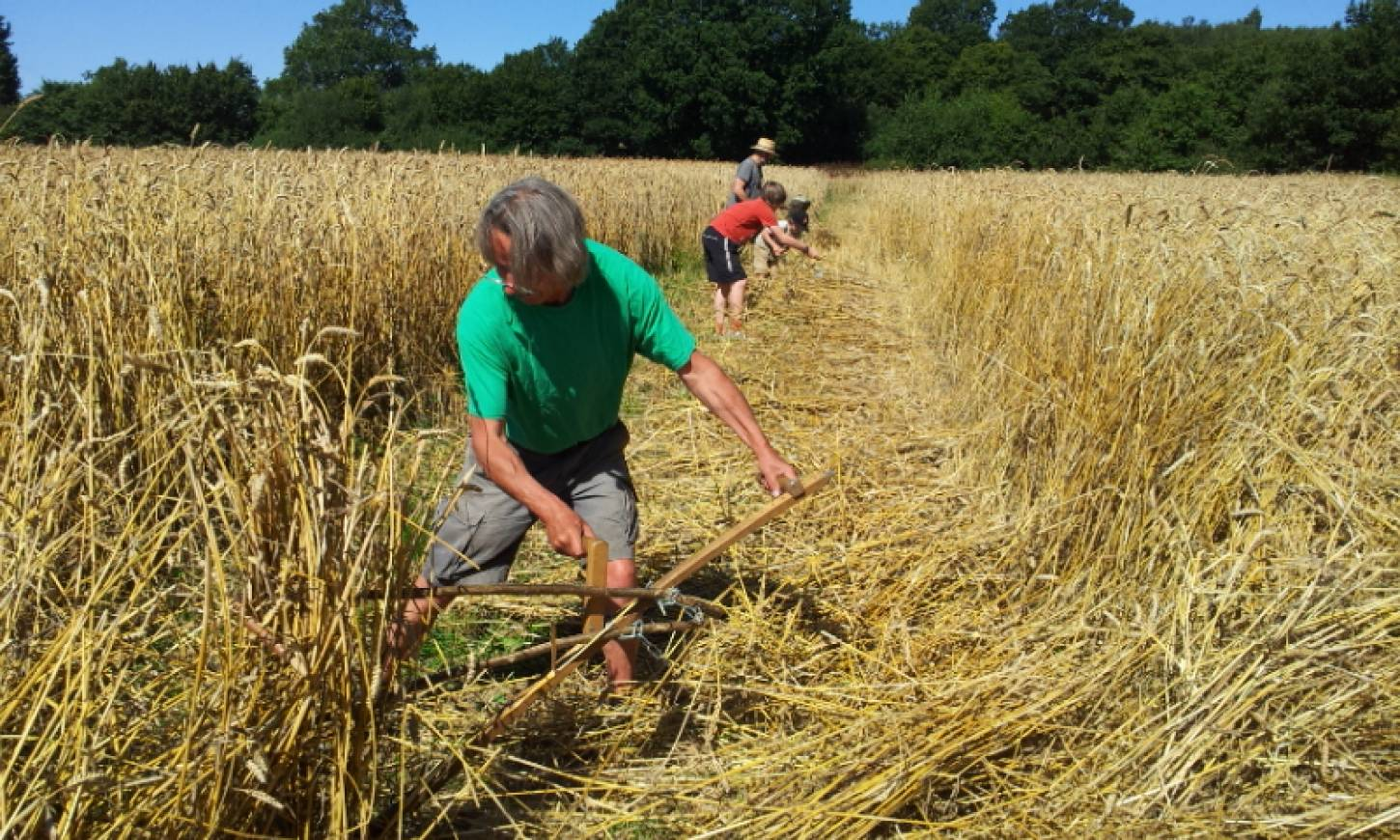 WoWo manual harvest pic: Ann Bodkin, scything - 11:03am&nbsp;9<sup>th</sup>&nbsp;Aug.&nbsp;'15
