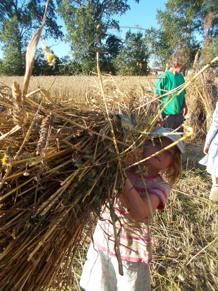WoWo manual harvest, pic: the Chicks - harvest home - 6:55pm&nbsp;9<sup>th</sup>&nbsp;Jul.&nbsp;'15