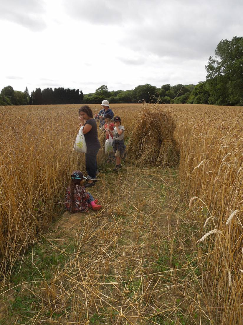 WoWo manual harvest - sorting - 4:17pm&nbsp;6<sup>th</sup>&nbsp;Aug.&nbsp;'15