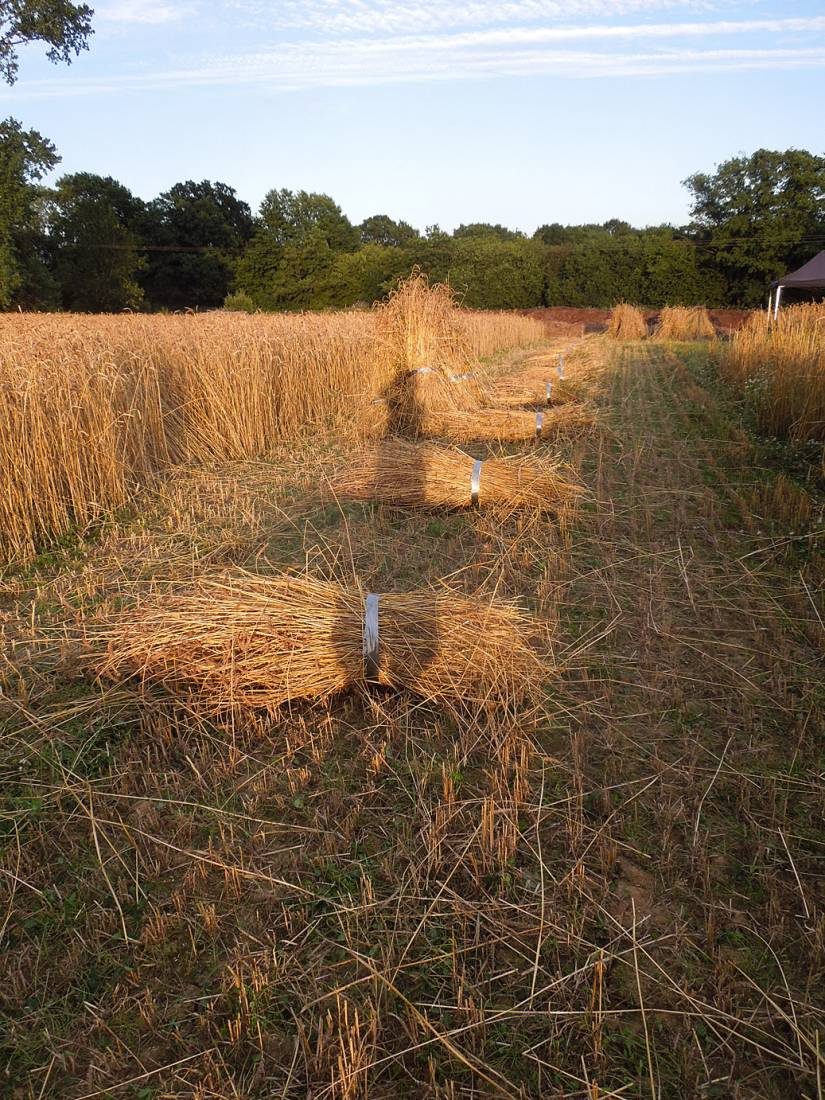 WoWo manual harvest - 7:54pm&nbsp;6<sup>th</sup>&nbsp;Aug.&nbsp;'15