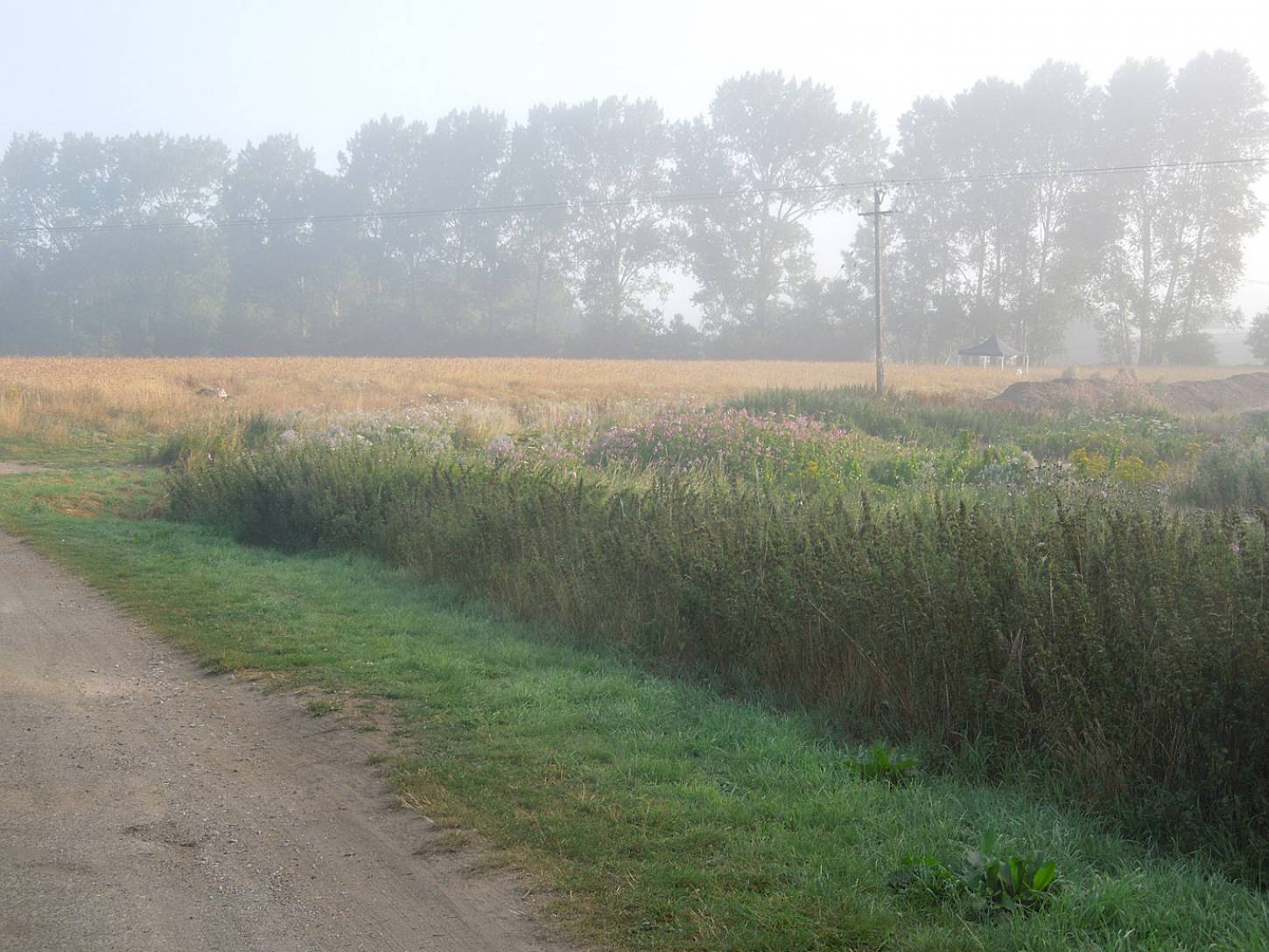 WoWo manual harvest - morning day #3 - 7:17am&nbsp;8<sup>th</sup>&nbsp;Aug.&nbsp;'15
