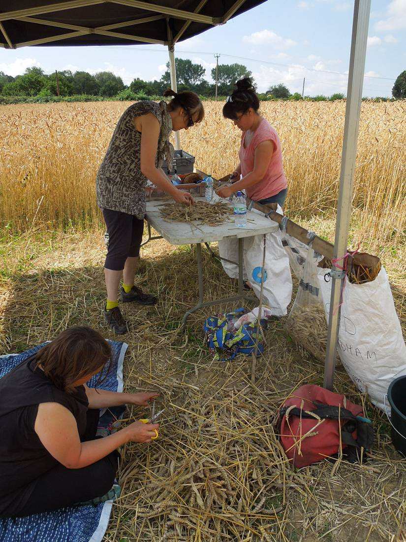 WoWo manual harvest - 12:03pm&nbsp;8<sup>th</sup>&nbsp;Aug.&nbsp;'15