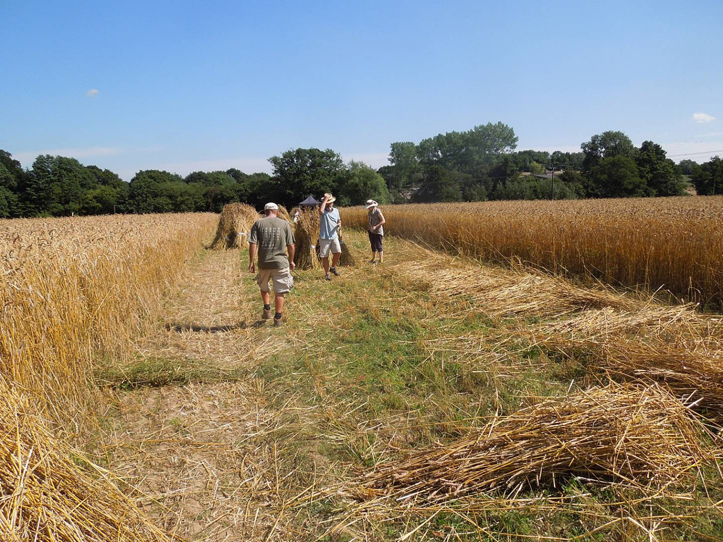 WoWo manual harvest - 3:26pm&nbsp;8<sup>th</sup>&nbsp;Aug.&nbsp;'15