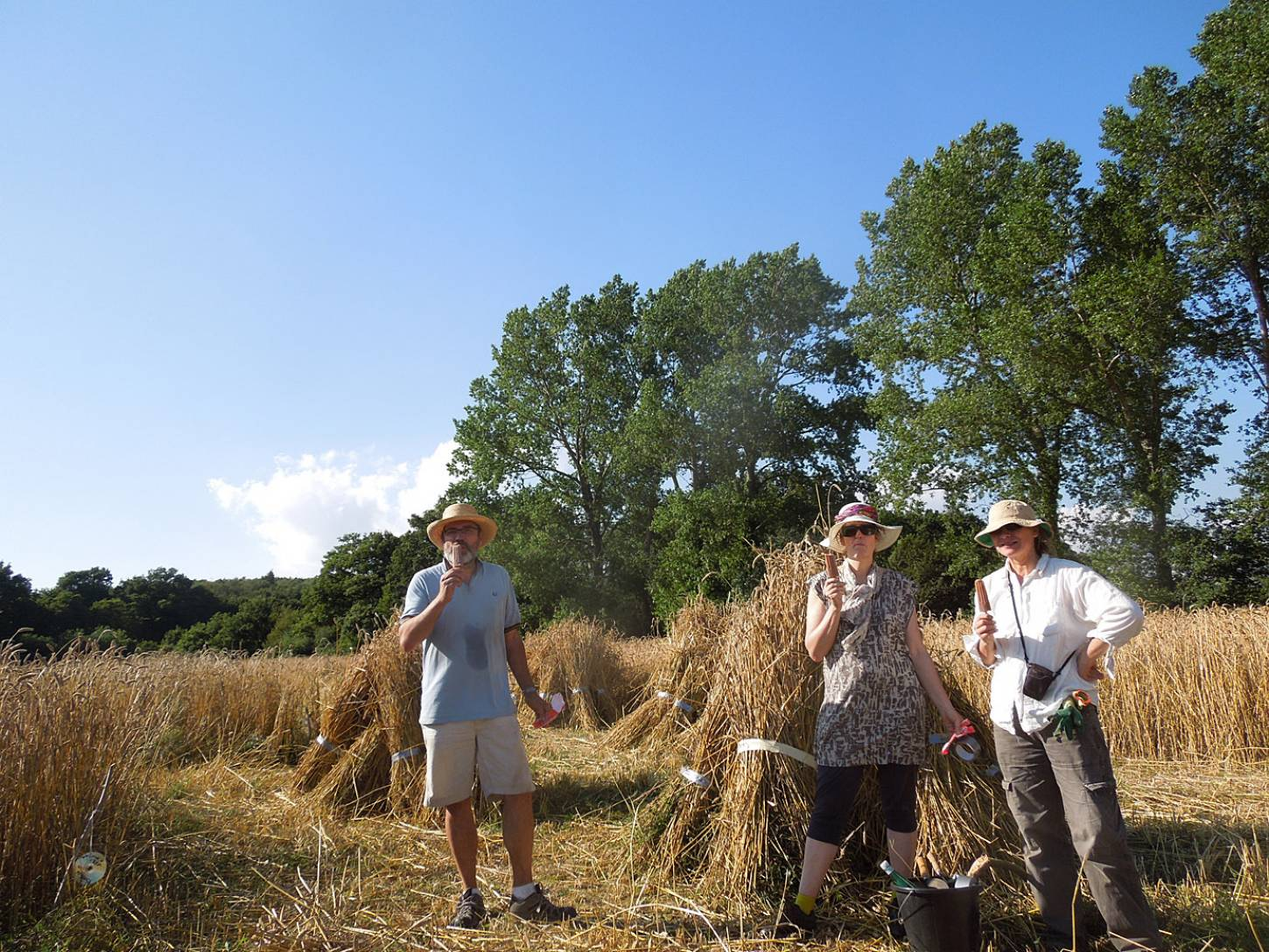 WoWo manual harvest - lolly break day #3 - 5:13pm&nbsp;8<sup>th</sup>&nbsp;Aug.&nbsp;'15
