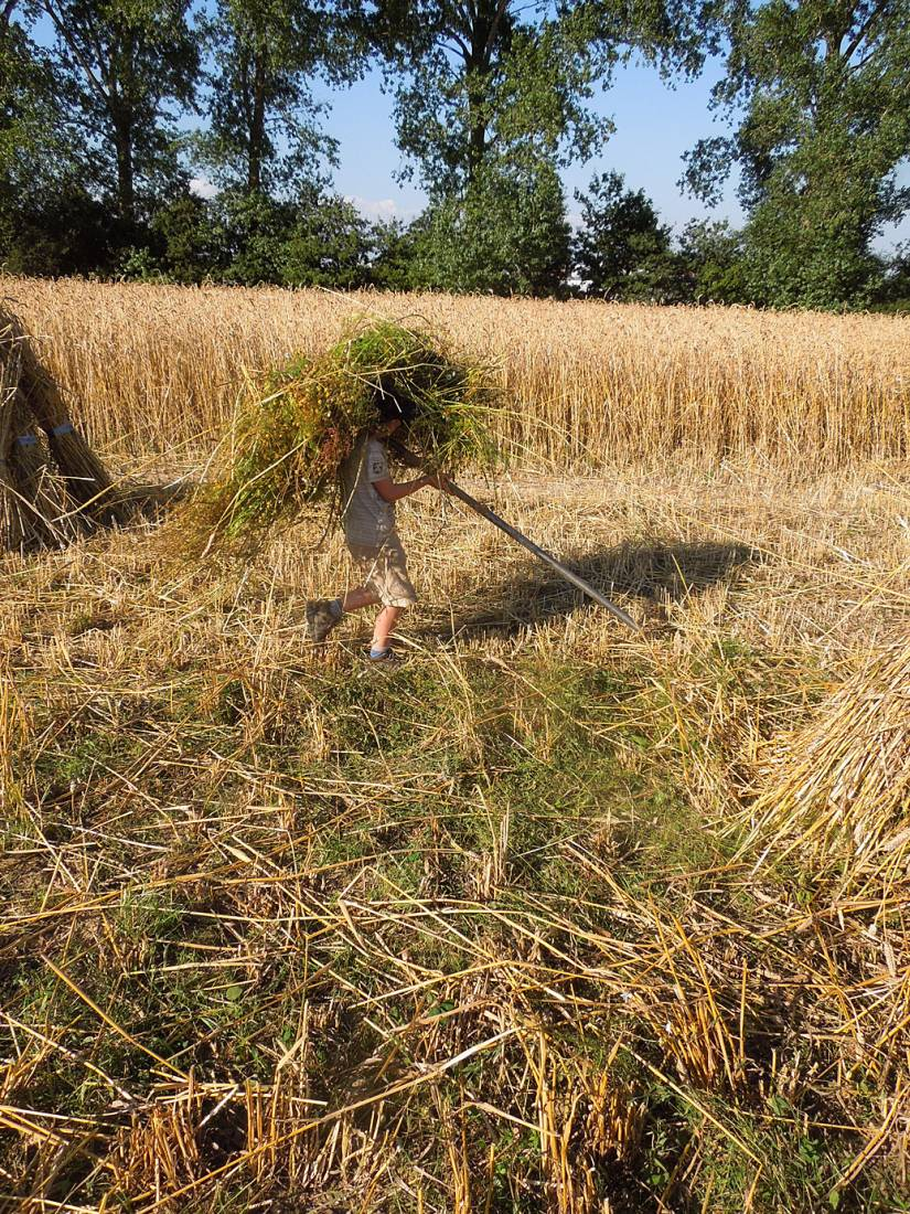 WoWo manual harvest - 5:50pm&nbsp;8<sup>th</sup>&nbsp;Aug.&nbsp;'15