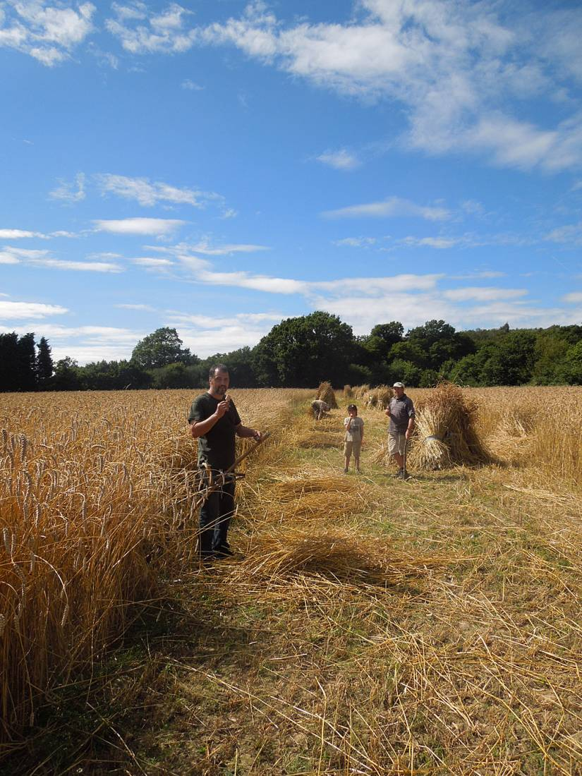 WoWo manual harvest, Stephen, Evan and Dave on lolly break - 3:35pm&nbsp;9<sup>th</sup>&nbsp;Aug.&nbsp;'15