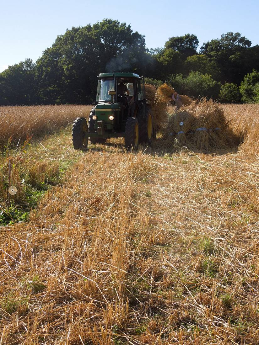 WoWo manual harvest - harvest home - 5:27pm&nbsp;9<sup>th</sup>&nbsp;Aug.&nbsp;'15