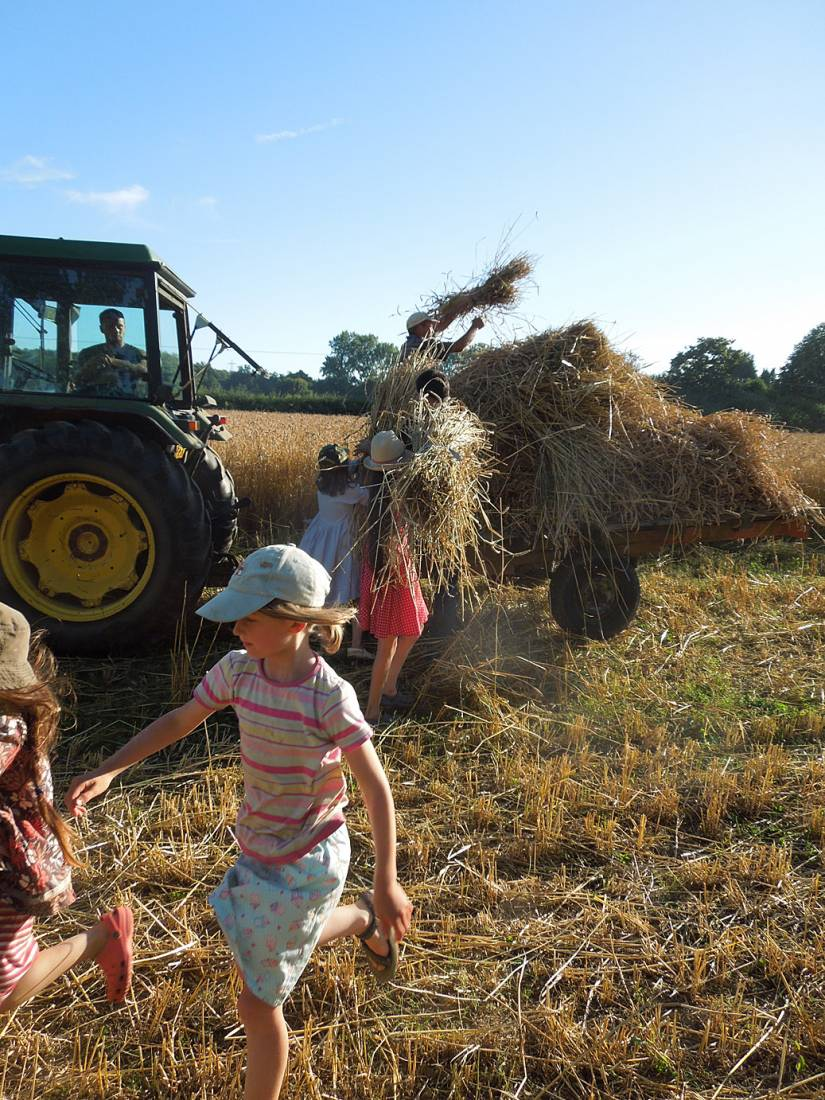 WoWo manual harvest - harvest home - 6:40pm&nbsp;9<sup>th</sup>&nbsp;Aug.&nbsp;'15