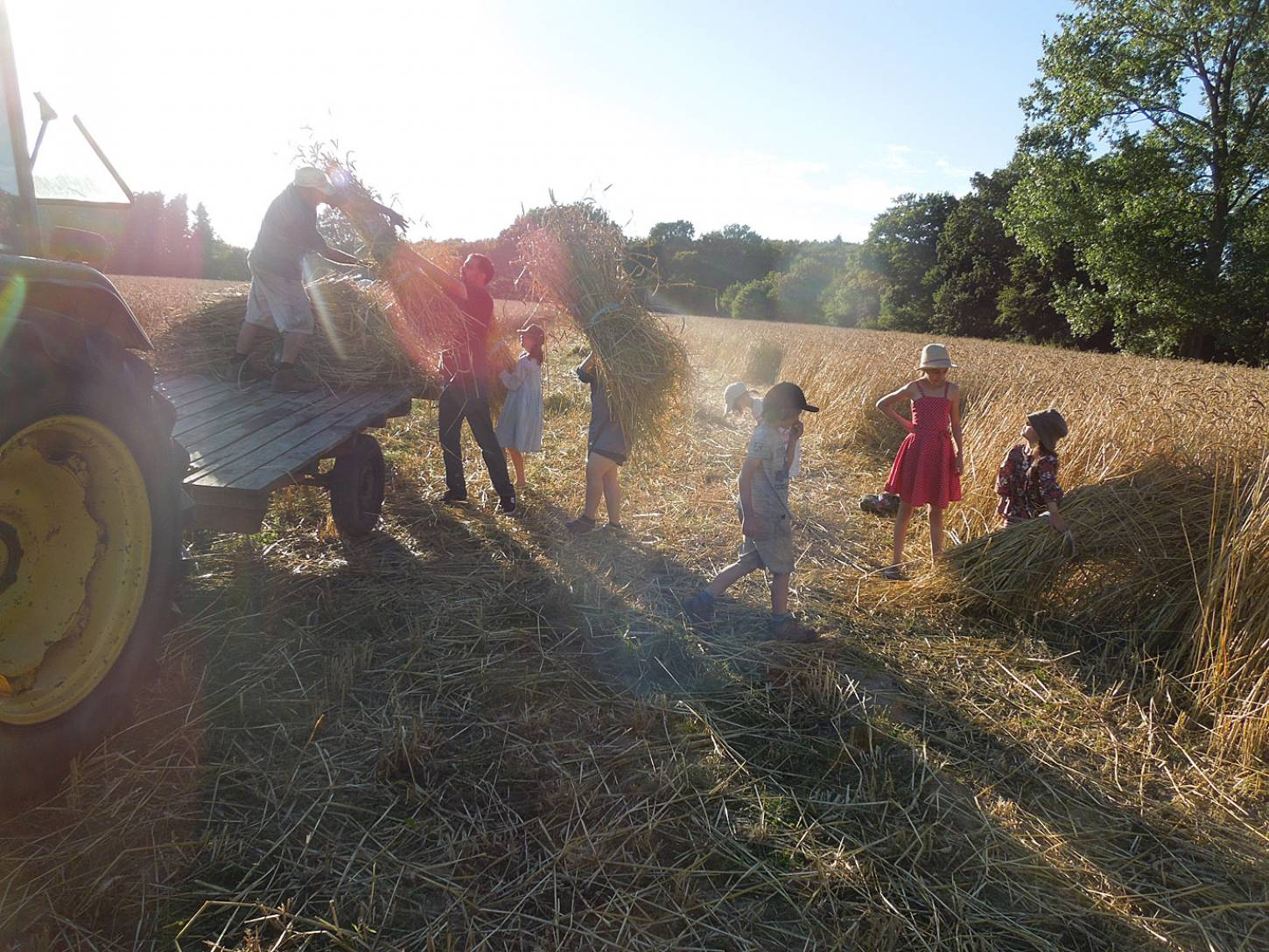 WoWo manual harvest - harvest home - 6:58pm&nbsp;9<sup>th</sup>&nbsp;Aug.&nbsp;'15