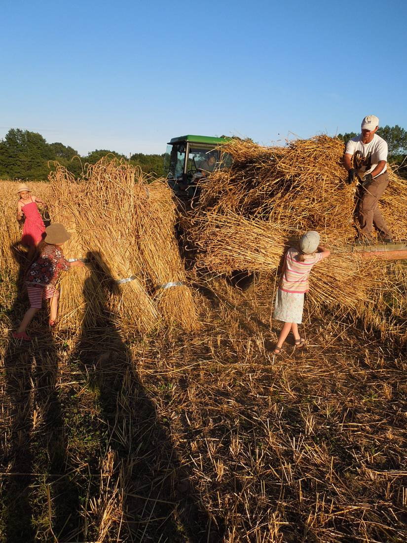 WoWo manual harvest - harvest home - 7:37pm&nbsp;9<sup>th</sup>&nbsp;Aug.&nbsp;'15