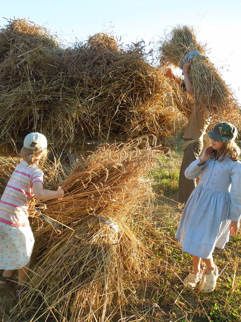WoWo manual harvest - harvest home - 7:40pm&nbsp;9<sup>th</sup>&nbsp;Aug.&nbsp;'15