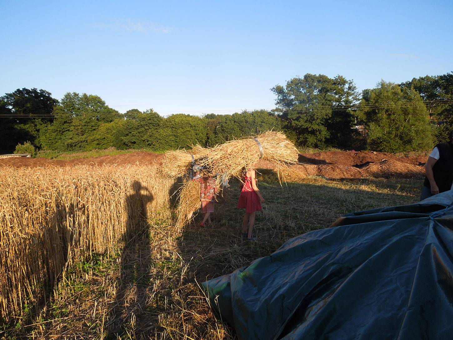 WoWo manual harvest - harvest home - 7:44pm&nbsp;9<sup>th</sup>&nbsp;Aug.&nbsp;'15