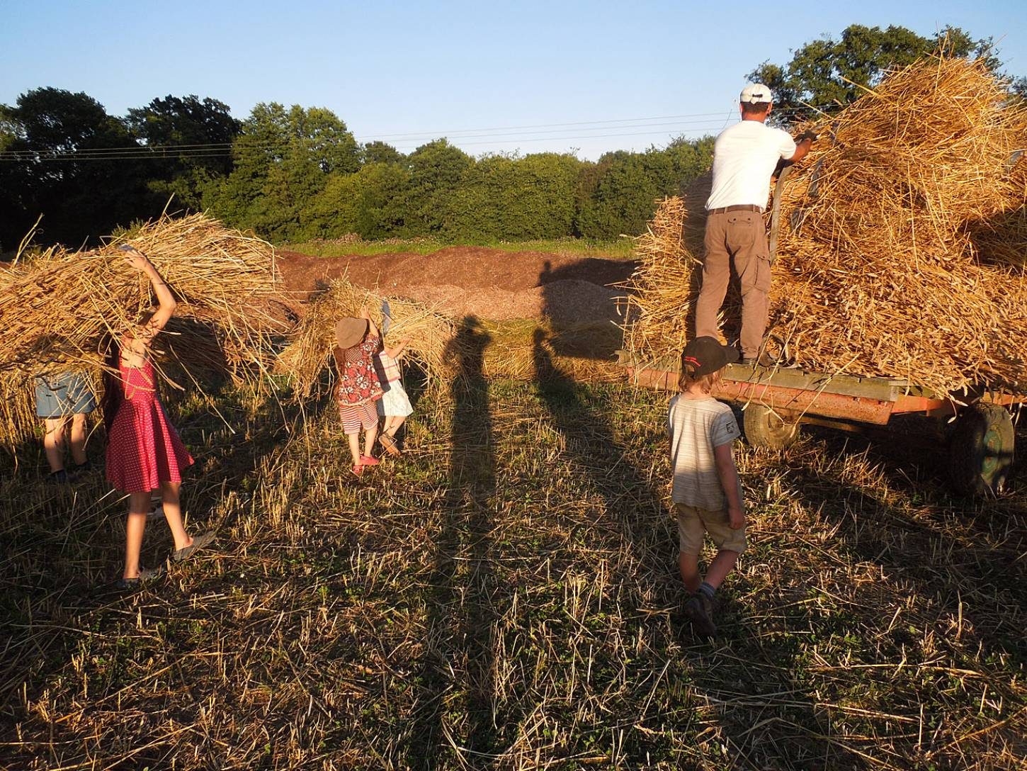 WoWo manual harvest - 7:44pm&nbsp;9<sup>th</sup>&nbsp;Aug.&nbsp;'15
