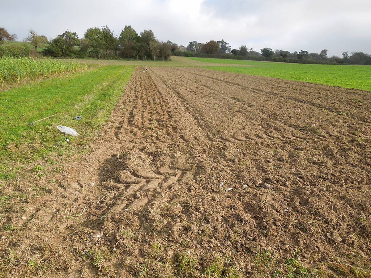 Perry Court biodynamic farm sowing of Red Lammas, Old Kent Red, Kentisch Red Straw and Kent Old Hoary - 10:44am&nbsp;28<sup>th</sup>&nbsp;Oct.&nbsp;'14