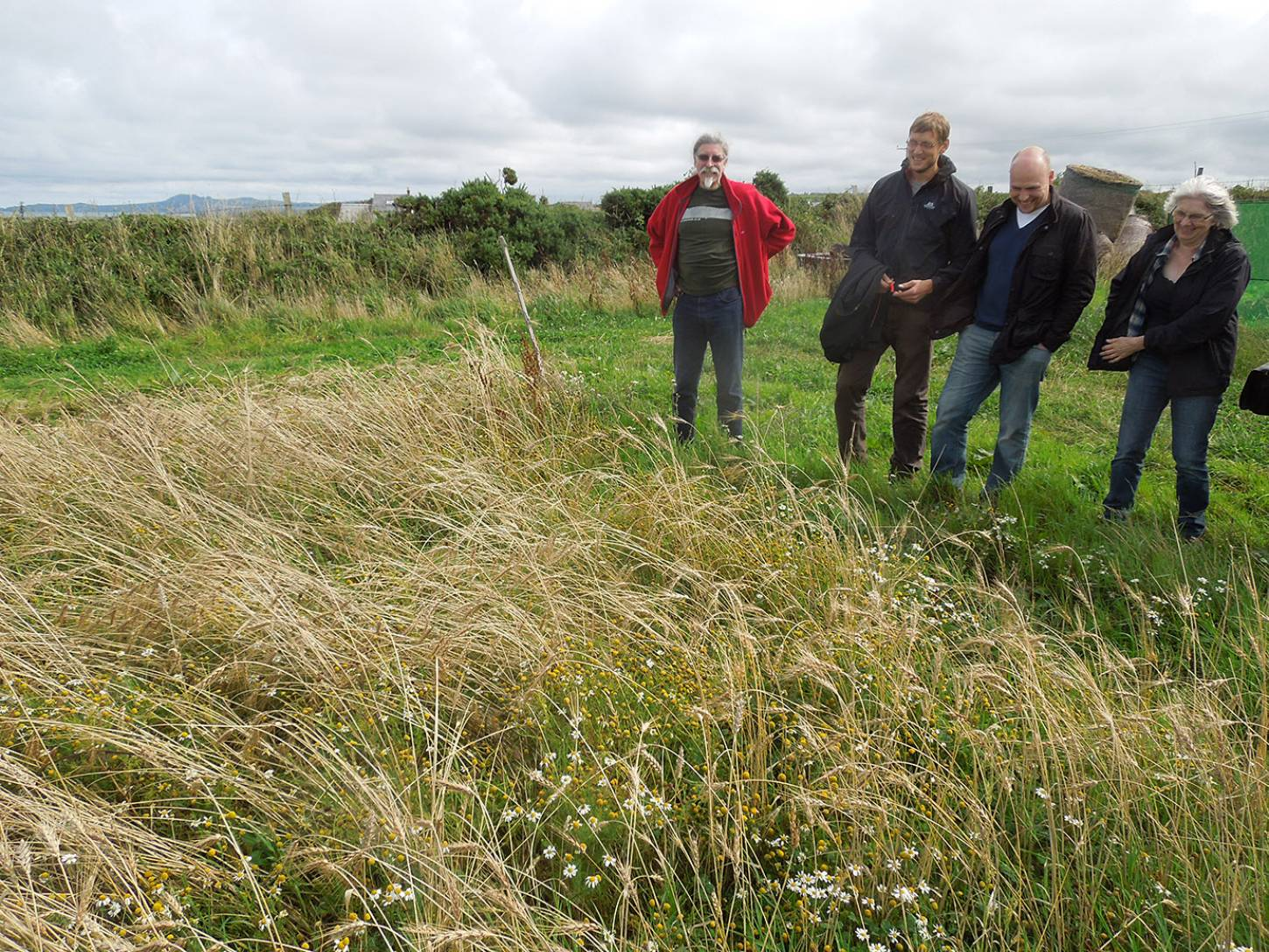 visiting the Welsh Grain Forum - 12:20pm&nbsp;24<sup>th</sup>&nbsp;Aug.&nbsp;'15