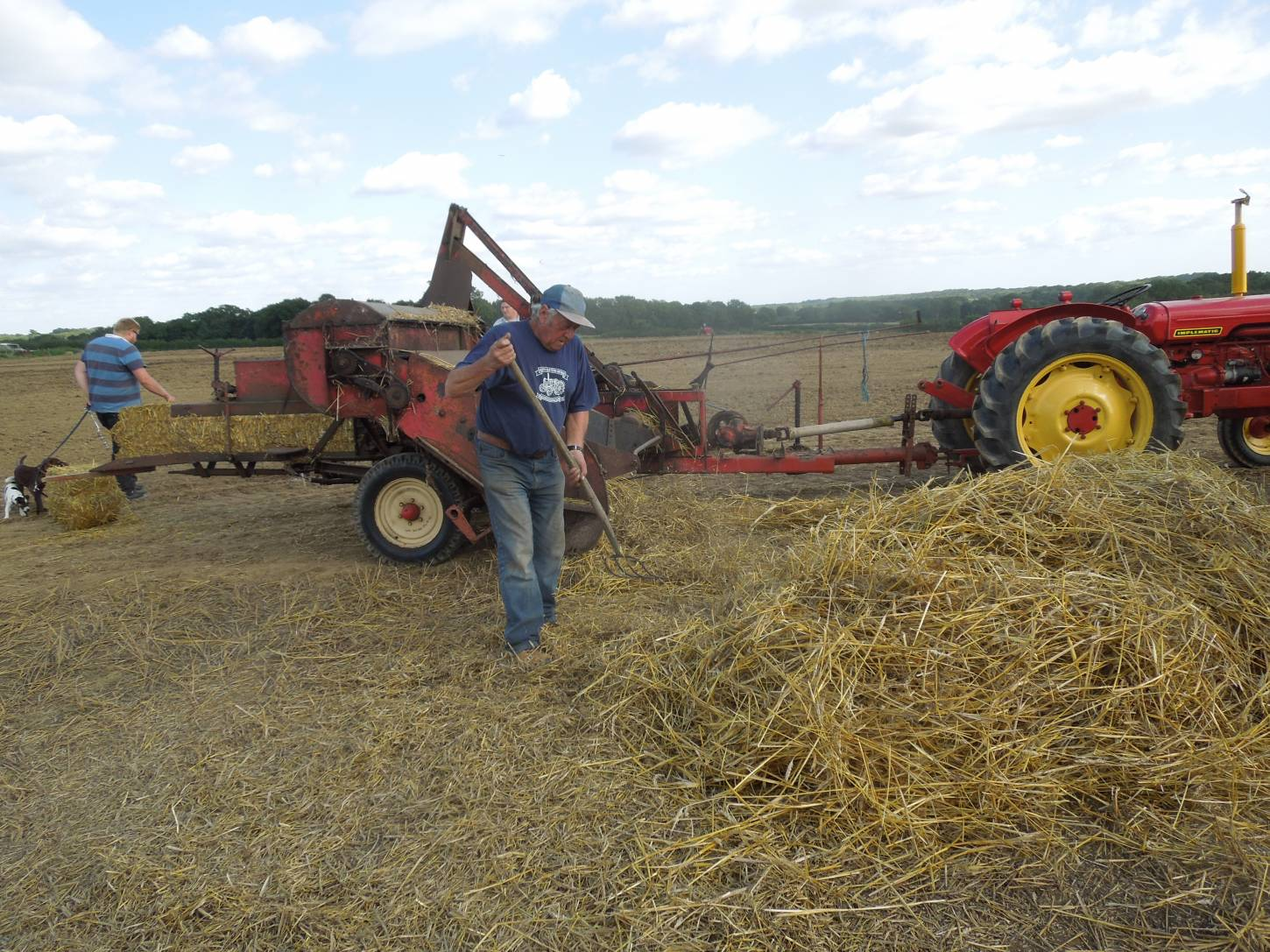 threshing Kent Old Hoary at Townings Farm vintage agricultural show - 3:50pm&nbsp;6<sup>th</sup>&nbsp;Sep.&nbsp;'15