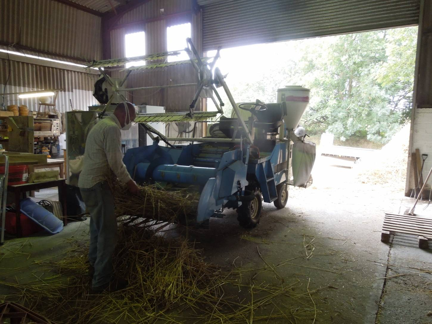 threshing out our named lines sheaves with help of plot combine and Rodger and Martin from <a href='http://www.agrifactors.co.uk/' target=_blank>Agrifactors</a> - 11:23am&nbsp;16<sup>th</sup>&nbsp;Sep.&nbsp;'15