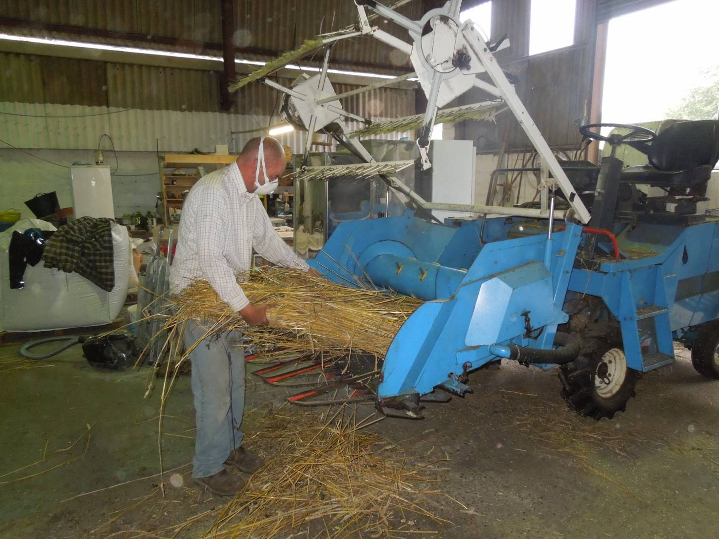threshing out our named lines sheaves with help of plot combine and Rodger and Martin from <a href='http://www.agrifactors.co.uk/' target=_blank>Agrifactors</a> - 1:33pm&nbsp;16<sup>th</sup>&nbsp;Sep.&nbsp;'15
