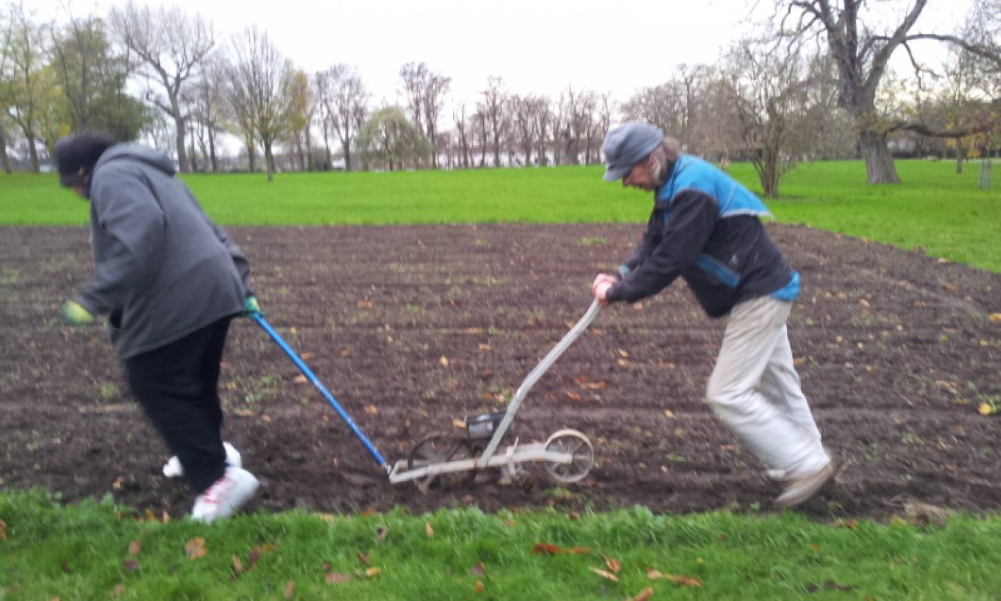Day 1 sowing on Ruskin Park, 'the Wheats Field', the drill in action, pics <a href='http://www.brockwellgreenhouses.org.uk/welcome/' target=_blank>Ann Bodkin</a> - 2:41pm&nbsp;28<sup>th</sup>&nbsp;Nov.&nbsp;'15