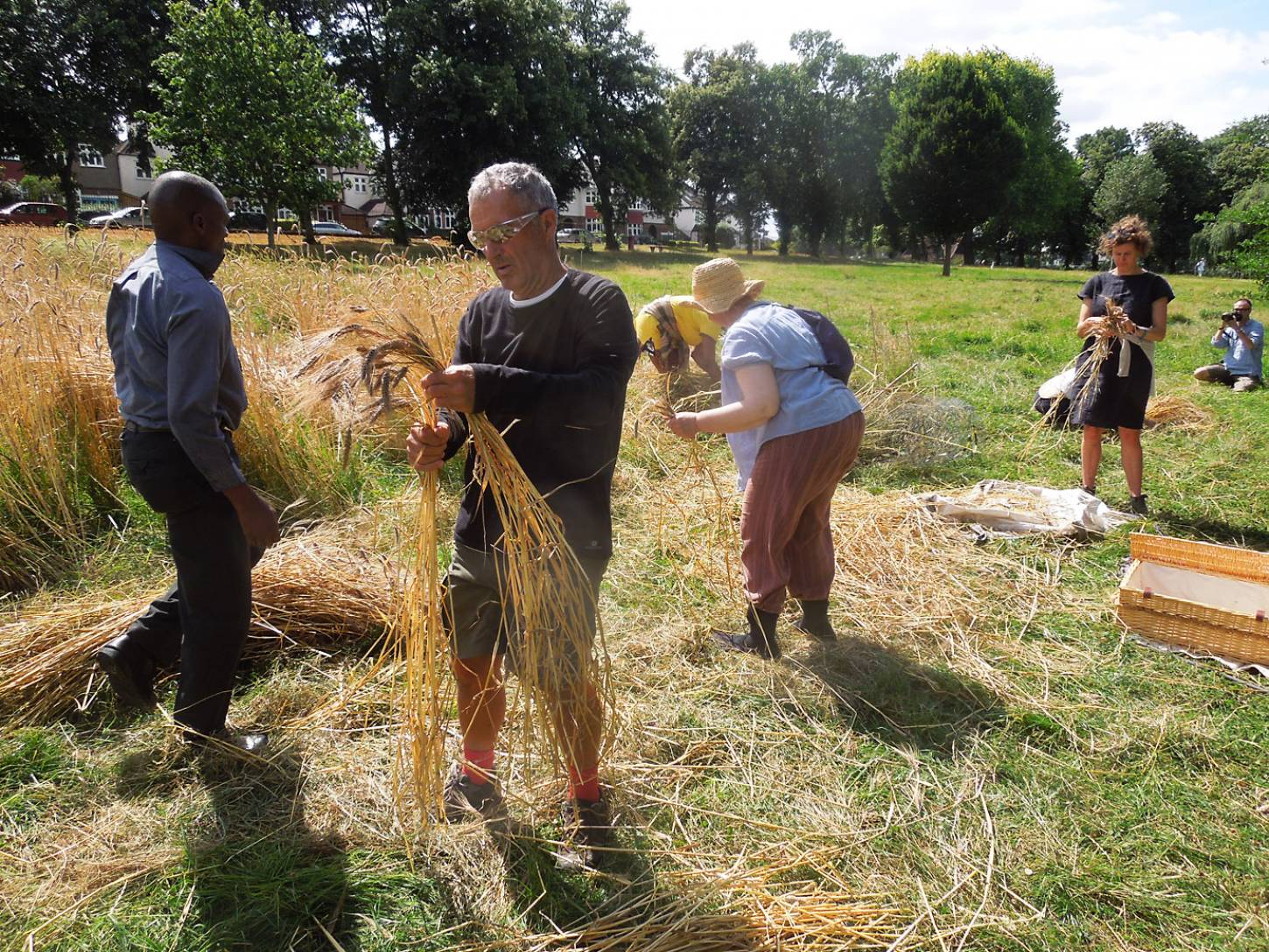 Ruskin Park harvest - 1:02pm&nbsp;8<sup>th</sup>&nbsp;Aug.&nbsp;'16