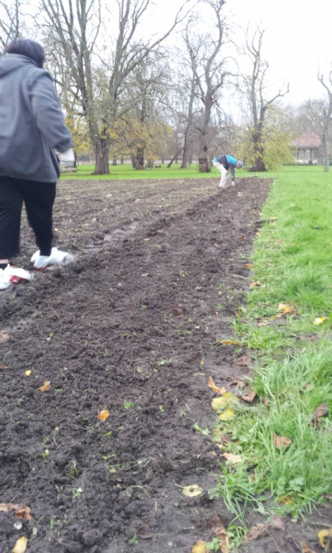 Day 1 sowing on Ruskin Park, 'the Wheats Field', pics <a href='http://www.brockwellgreenhouses.org.uk/welcome/' target=_blank>Ann Bodkin</a> - 3:25pm&nbsp;28<sup>th</sup>&nbsp;Nov.&nbsp;'15