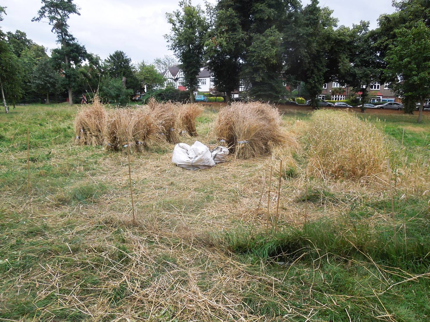 Ruskin Park harvest - 7:08pm&nbsp;8<sup>th</sup>&nbsp;Aug.&nbsp;'16