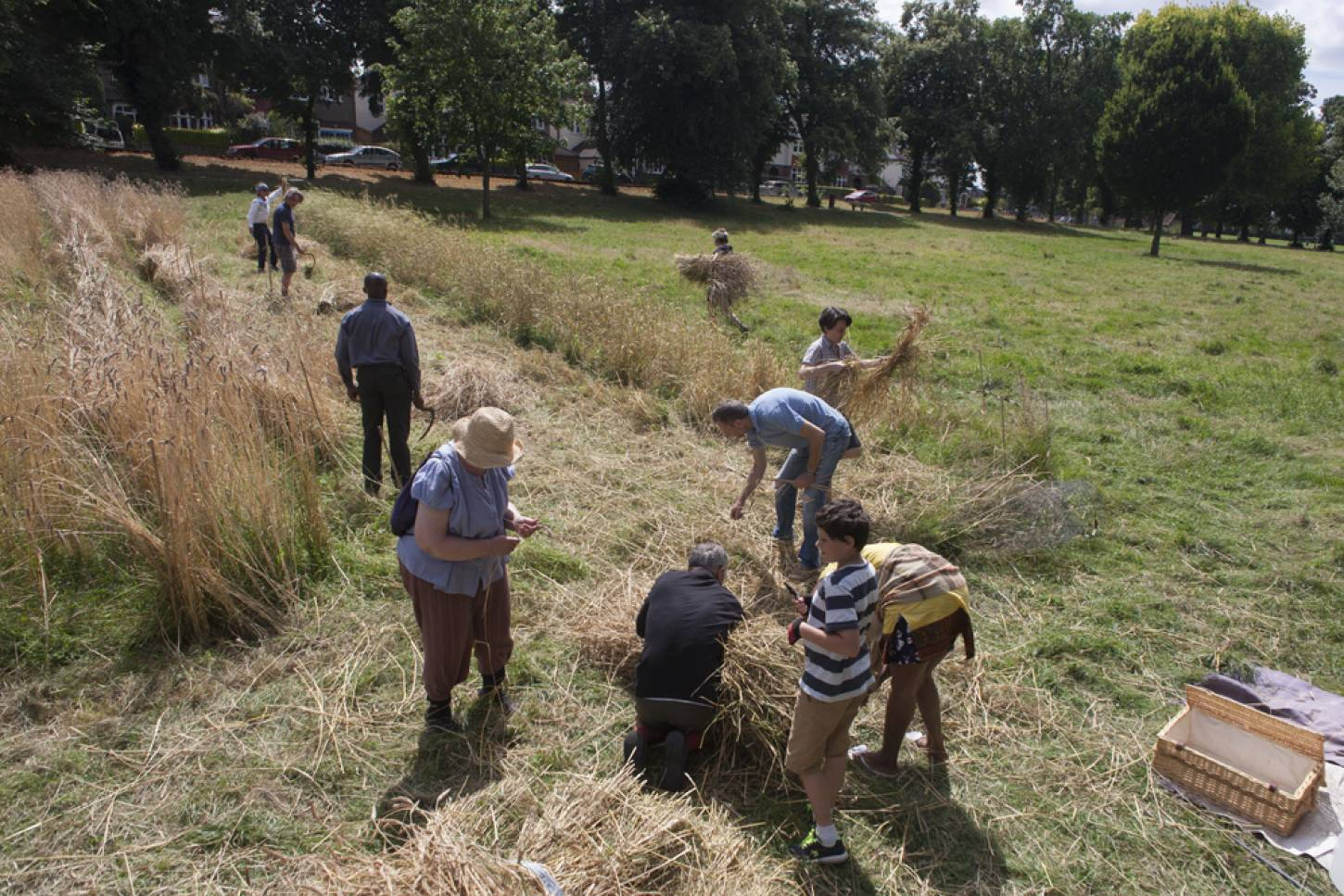 Ruskin Park harvest, pic  © <a href='http://www.bakerpictures.com/index' target='_blank'>Richard Baker</a> - 12:21pm&nbsp;8<sup>th</sup>&nbsp;Aug.&nbsp;'16