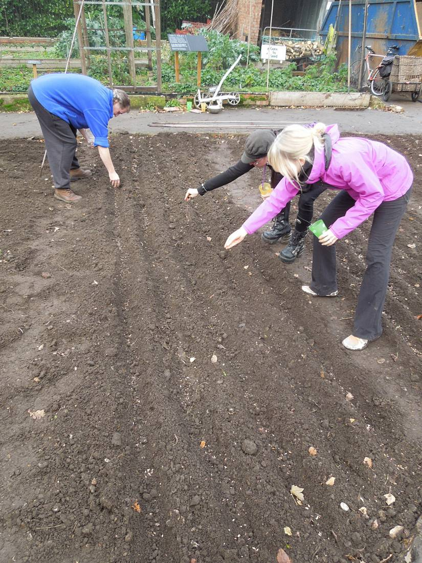 sowing at the <A href='http://www.brockwellgreenhouses.org.uk/welcome/' target=_blank>Brockwell Community Greenhouses</a> - 2:06pm&nbsp;26<sup>th</sup>&nbsp;Nov.&nbsp;'15