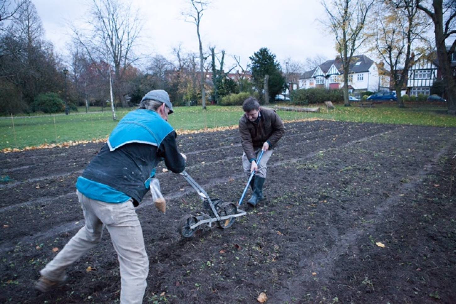 Day 5 of Ruskin Park sowing with Galina Wells of the <a Href='https://www.facebook.com/FriendsofRuskinPark/?fref=ts' target=_blank>Friends of Ruskin Park</a>, pics Nick Wells of <A href='http://friendsofruskinpark.org.uk/?page_id=1753' target=_blank>FoRP</a>