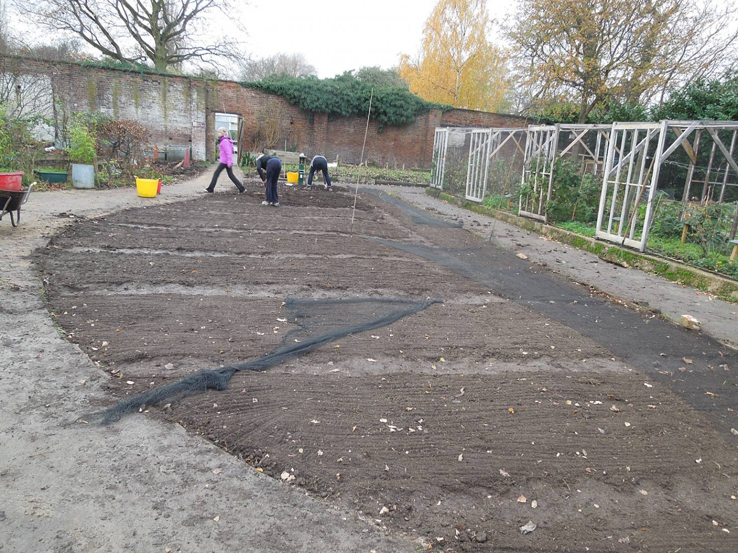 sowing at the <A href='http://www.brockwellgreenhouses.org.uk/welcome/' target=_blank>Brockwell Community Greenhouses</a>, covering with nets - 3:15pm&nbsp;26<sup>th</sup>&nbsp;Nov.&nbsp;'15