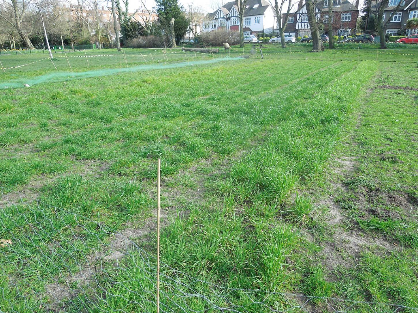 Ruskin Park wheat trials Spring #1 - 4:14pm&nbsp;5<sup>th</sup>&nbsp;Apr.&nbsp;'16