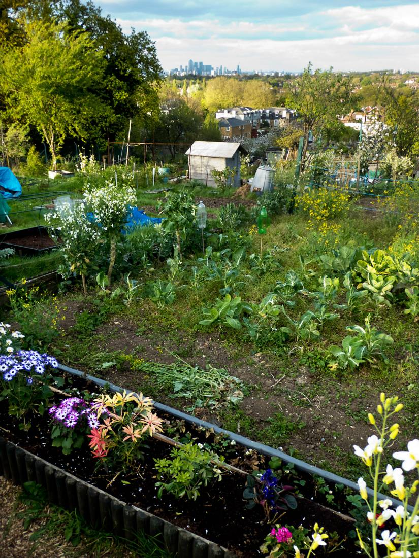 plot crop review April '17 - evening view from Rosendale Allotments to Canary Wharf