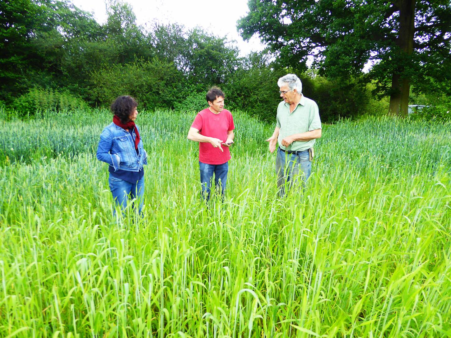 Lodge Farm review with Valerie and Samuel Poilane, mill makers from Brittany and farmer Mike Pinard, <a href='http://brockwell-bake.org.uk/wheat/hub.php?ID=38' target='_blank'>Red Chidham</a> behind, <a href='http://brockwell-bake.org.uk/wheat/hub.php?ID=51' target='_blank'>Blue Cone Rivet</a> in front - 1:38pm&nbsp;5<sup>th</sup>&nbsp;Jun.&nbsp;'17  <a href='http://maps.google.com/?t=h&q=51.207906,-0.086983&z=18&output=embed' target=_blank><img src='http://www.brockwell-bake.org.uk/img/marker.png' style='border:none;vertical-align:top' height=16px></a>