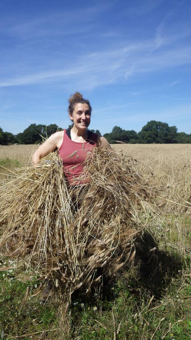 Liz with sheaves of Blue Cone Rivet, our manual harvest at Lodge Farm, pics = <a href='http://thecrowsrestbakehouse.co.uk/about/the-baker/' target='_blank'>Alex Vaughan</a> - 10:35am&nbsp;13<sup>th</sup>&nbsp;Aug.&nbsp;'17
