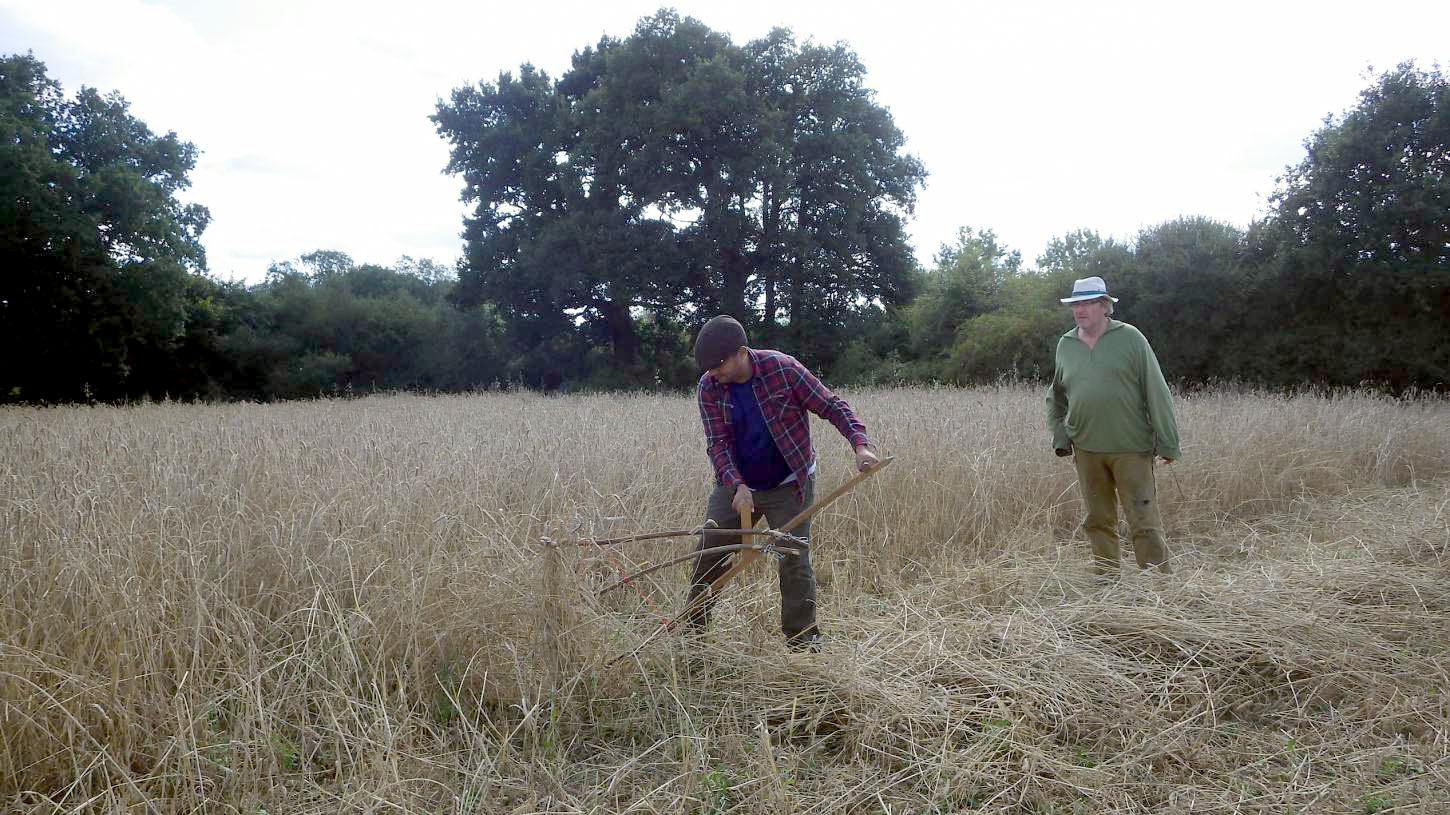 scythe action from Rod Bueno, our manual harvest at Lodge Farm, pics = <a href='http://thecrowsrestbakehouse.co.uk/about/the-baker/' target='_blank'>Alex Vaughan</a> - 2:50pm&nbsp;13<sup>th</sup>&nbsp;Aug.&nbsp;'17