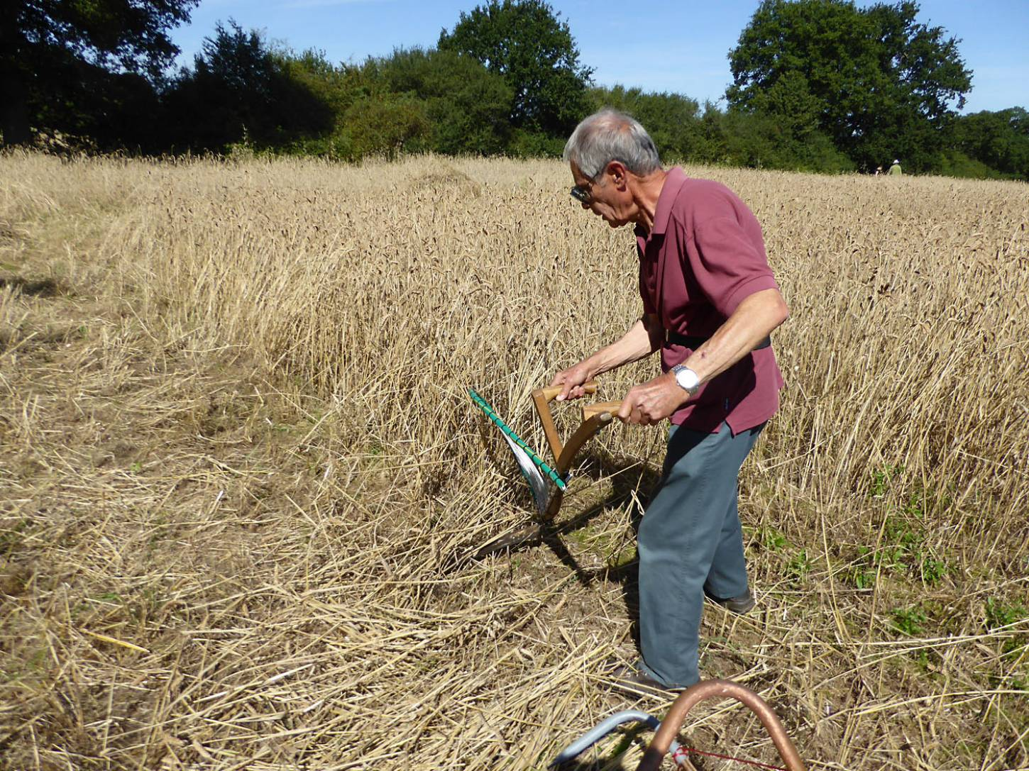 Chris Matcham in action with his version of wheat cradle, our manual harvest at Lodge Farm - 11:04am&nbsp;13<sup>th</sup>&nbsp;Aug.&nbsp;'17  <a href='http://maps.google.com/?t=h&q=51.208139,-0.086414&z=18&output=embed' target=_blank><img src='http://www.brockwell-bake.org.uk/img/marker.png' style='border:none;vertical-align:top' height=16px></a>