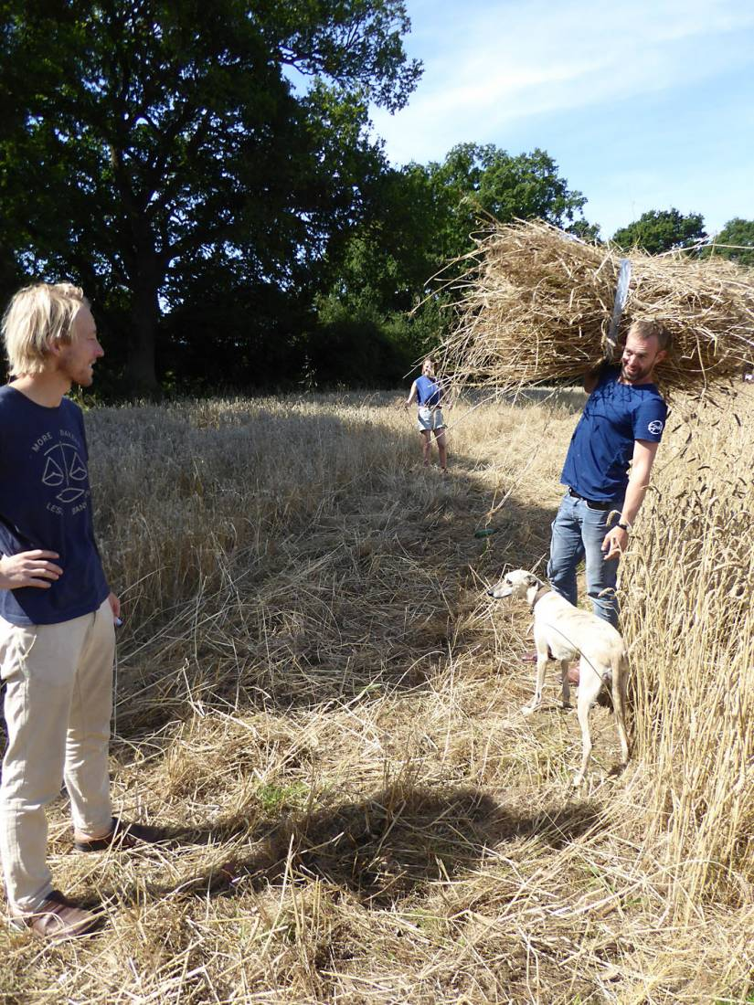 <a href='http://e5bakehouse.com/' target='_blank'>Ben</a> & <a href='http://sodopizza.co.uk/' target='_blank'>Dan </a>& Starter our manual harvest at Lodge Farm - 11:21am&nbsp;13<sup>th</sup>&nbsp;Aug.&nbsp;'17