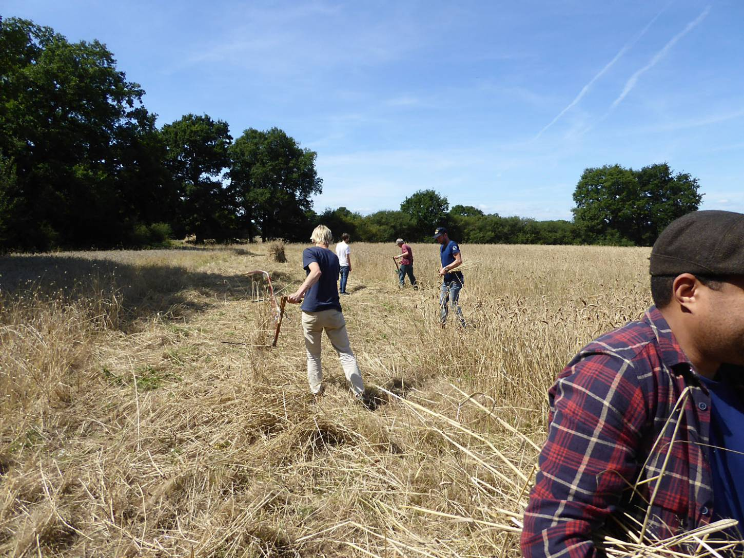 our manual harvest at Lodge Farm - 12:55pm&nbsp;13<sup>th</sup>&nbsp;Aug.&nbsp;'17