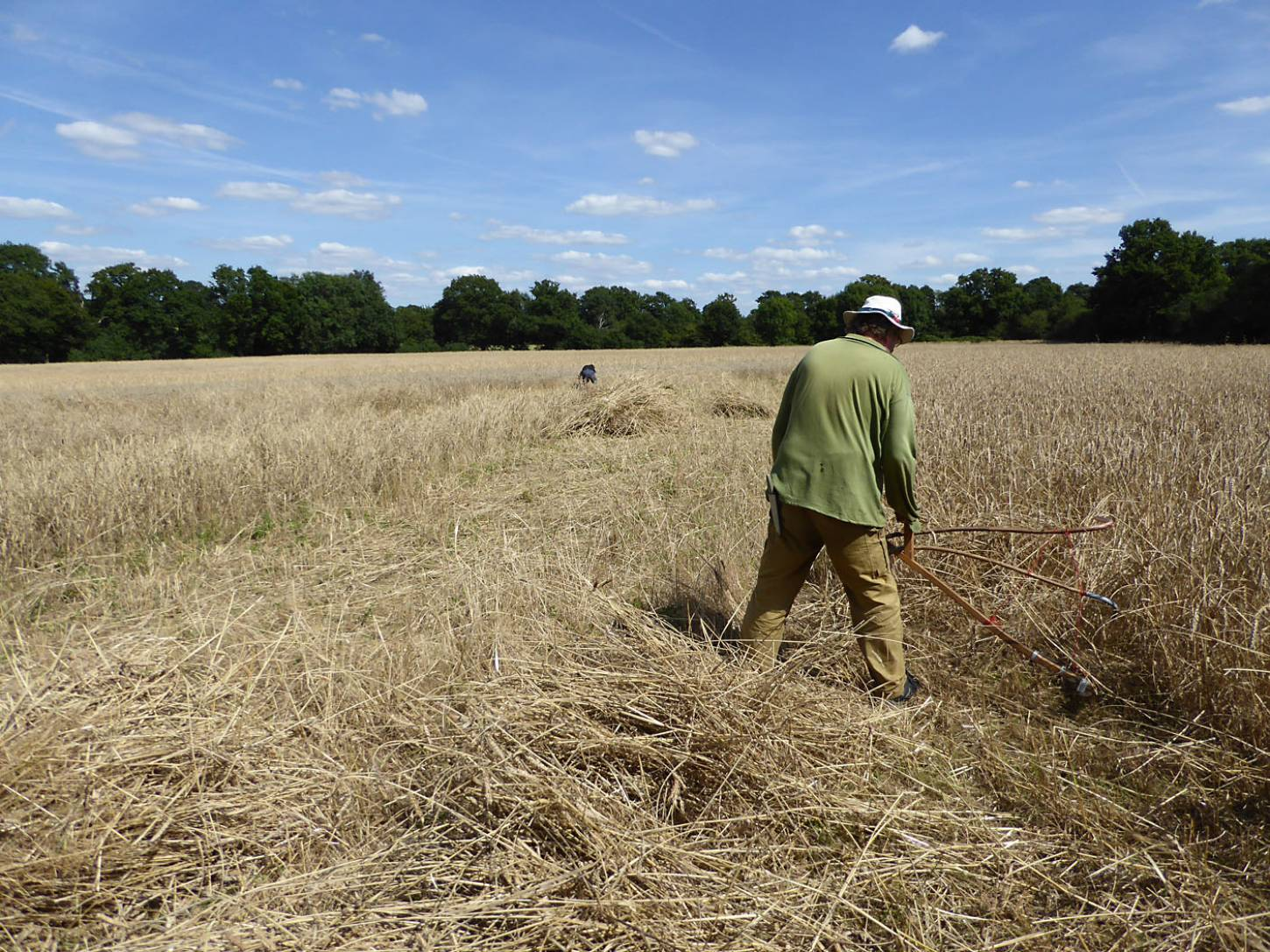 Michael Hazell in action with the scythe, our manual harvest at Lodge Farm - 2:05pm&nbsp;13<sup>th</sup>&nbsp;Aug.&nbsp;'17