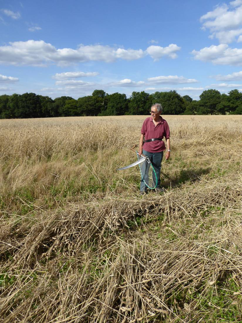 Chris Matcham checking his work, our manual harvest at Lodge Farm - 4:34pm&nbsp;13<sup>th</sup>&nbsp;Aug.&nbsp;'17  <a href='http://maps.google.com/?t=h&q=51.208203,-0.085994&z=18&output=embed' target=_blank><img src='http://www.brockwell-bake.org.uk/img/marker.png' style='border:none;vertical-align:top' height=16px></a>