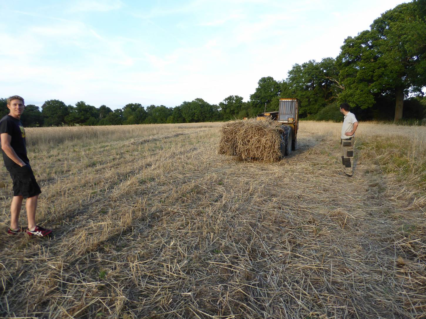 getting the <a href='http://www.wheat-gateway.org.uk/hub.php?ID=39' target='_blank'>Chidham Red</a> to the barn, our manual harvest at Lodge Farm - 7:31pm&nbsp;13<sup>th</sup>&nbsp;Aug.&nbsp;'17
