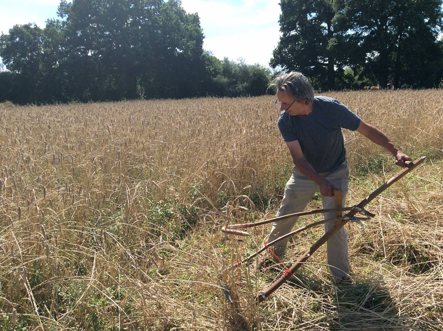 scythe action, our manual harvest at Lodge Farm, pics = <a href='http://www.annbodkin.co.uk/' target='_blank'>Ann Bodkin</a> - 1:58pm&nbsp;13<sup>th</sup>&nbsp;Aug.&nbsp;'17