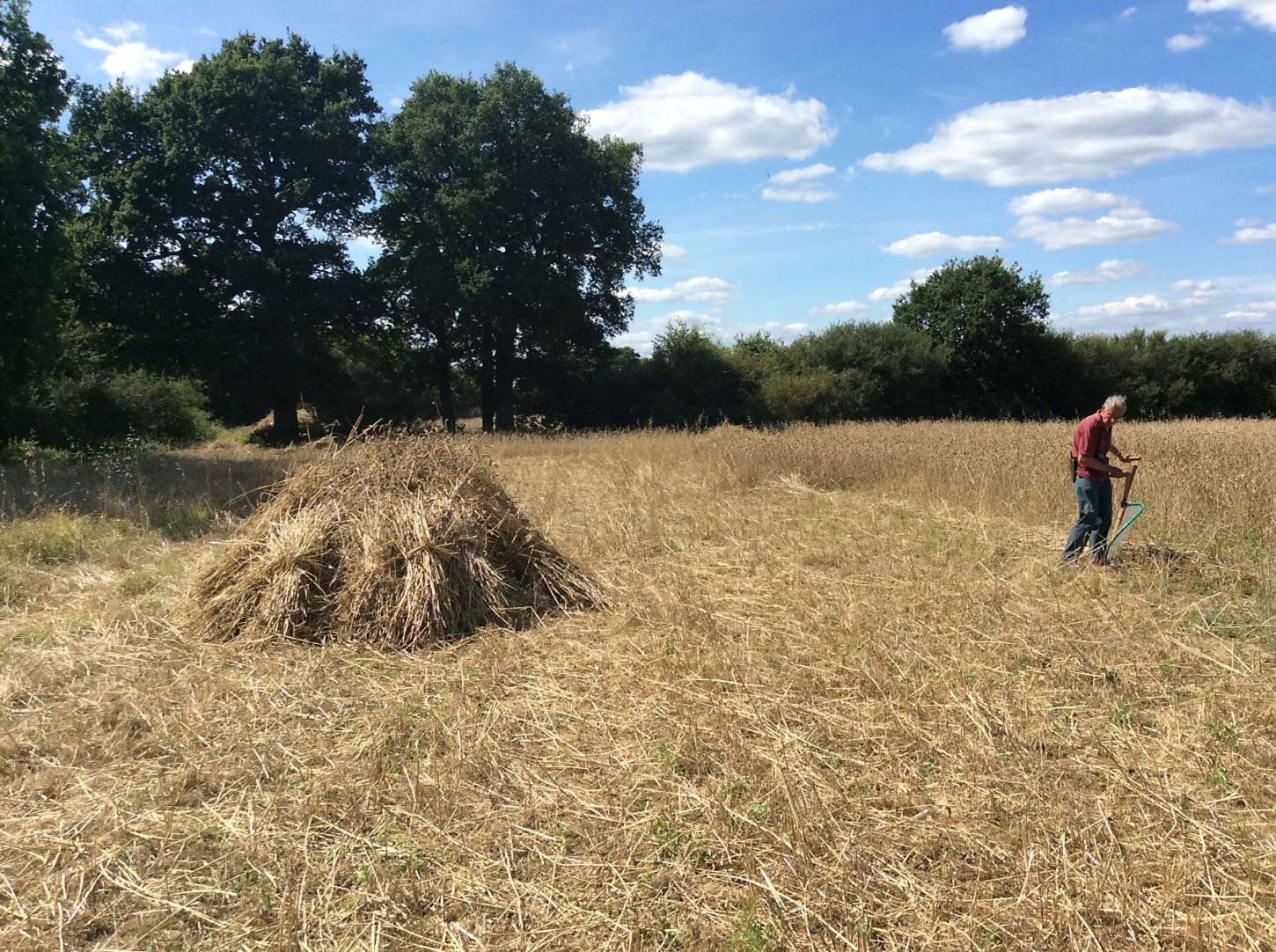 Red Chidham stook, our manual harvest at Lodge Farm, pics = <a href='http://www.annbodkin.co.uk/' target='_blank'>Ann Bodkin</a> - 2:09pm&nbsp;13<sup>th</sup>&nbsp;Aug.&nbsp;'17