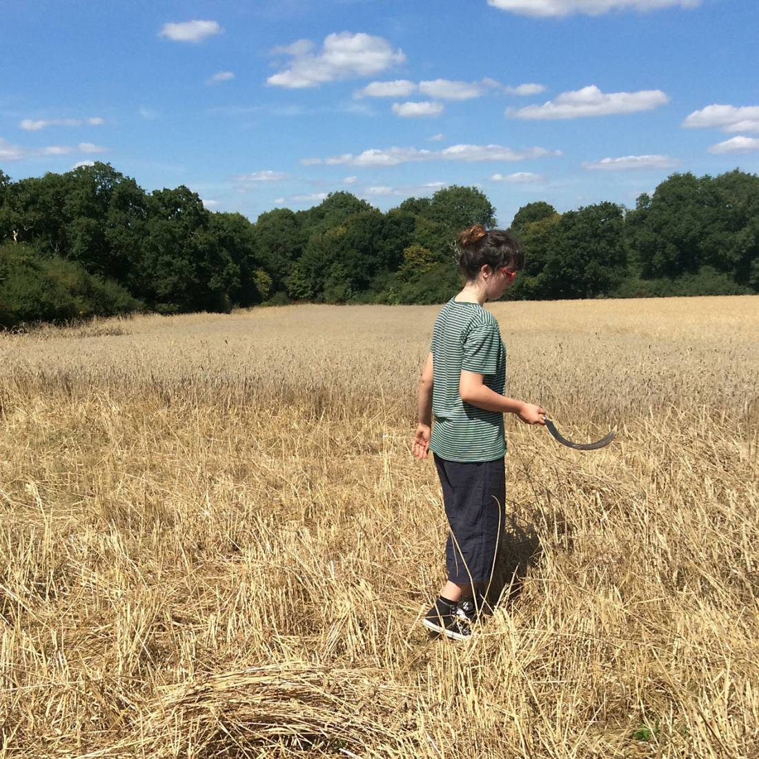 sickle action, our manual harvest at Lodge Farm, pics = <a href='http://www.annbodkin.co.uk/' target='_blank'>Ann Bodkin</a> - 1:59pm&nbsp;13<sup>th</sup>&nbsp;Aug.&nbsp;'17