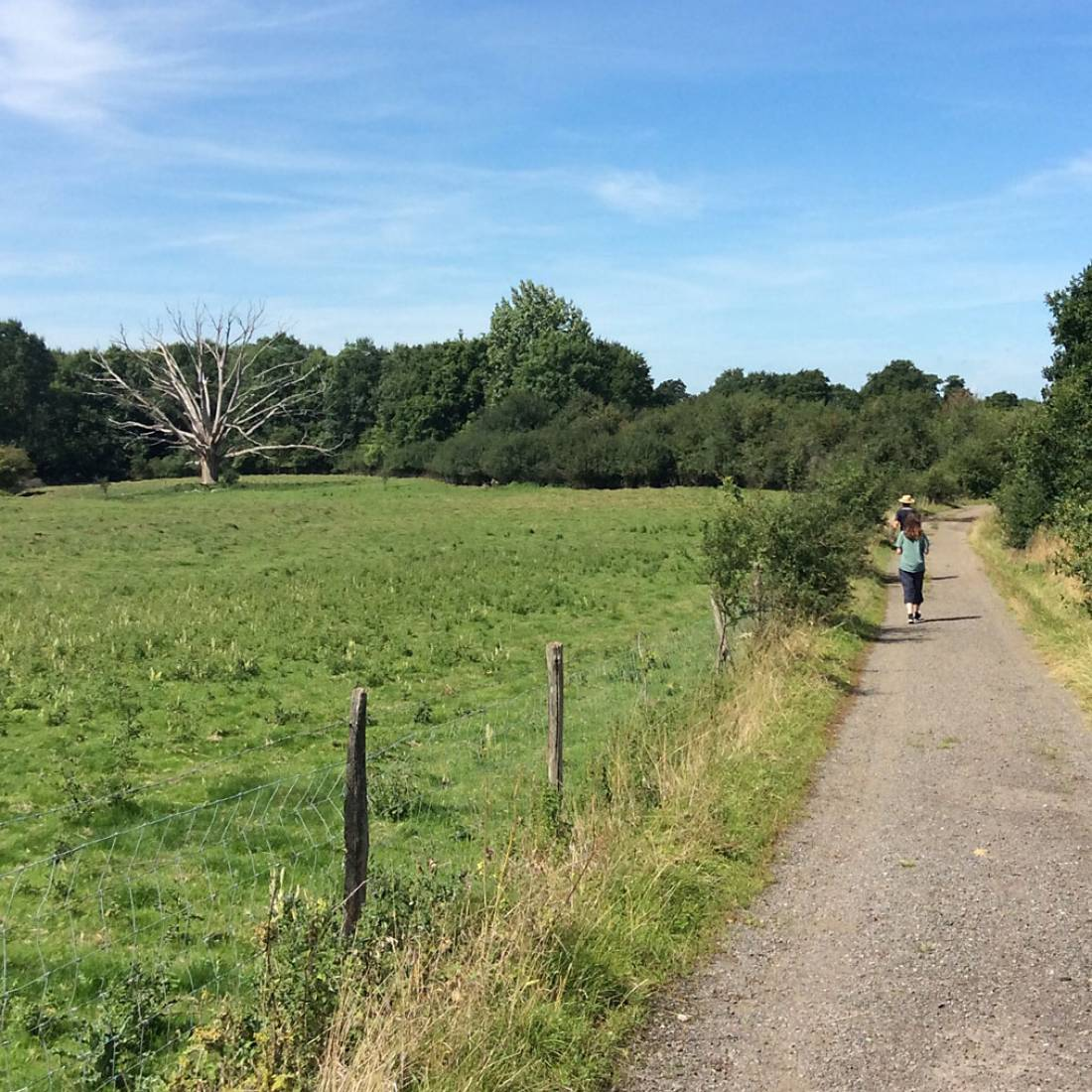 treking to the harvest, our manual harvest at Lodge Farm, pics = <a href='http://www.annbodkin.co.uk/' target='_blank'>Ann Bodkin</a> - 12:06pm&nbsp;13<sup>th</sup>&nbsp;Aug.&nbsp;'17