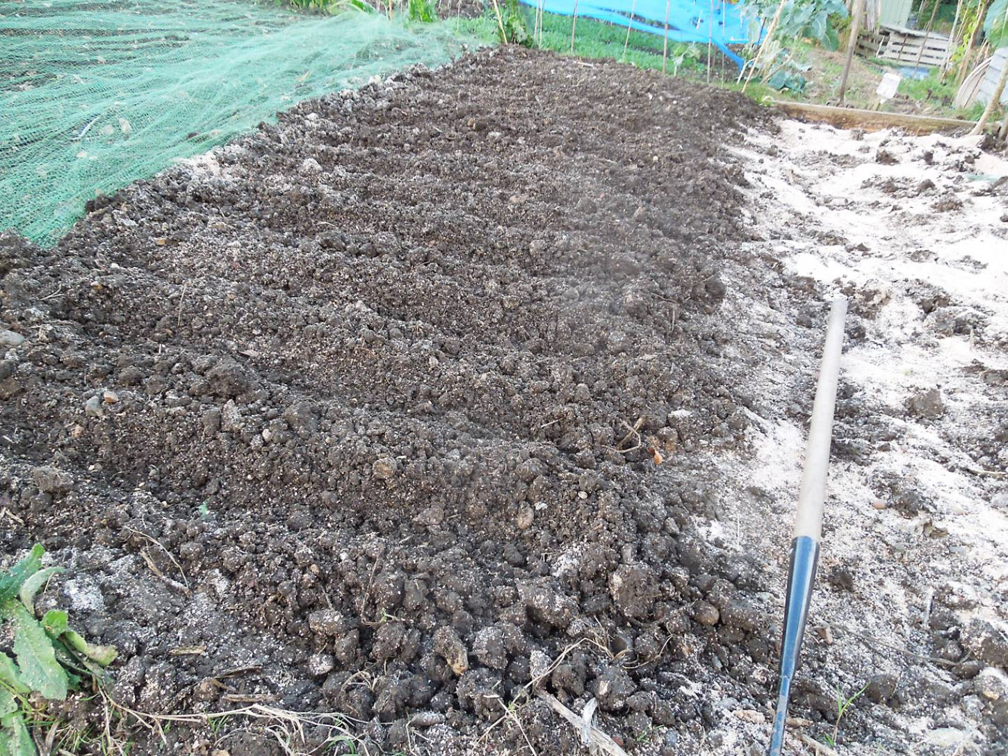 sowing INRA accessions on allotment - 5:12pm&nbsp;5<sup>th</sup>&nbsp;Nov.&nbsp;'16