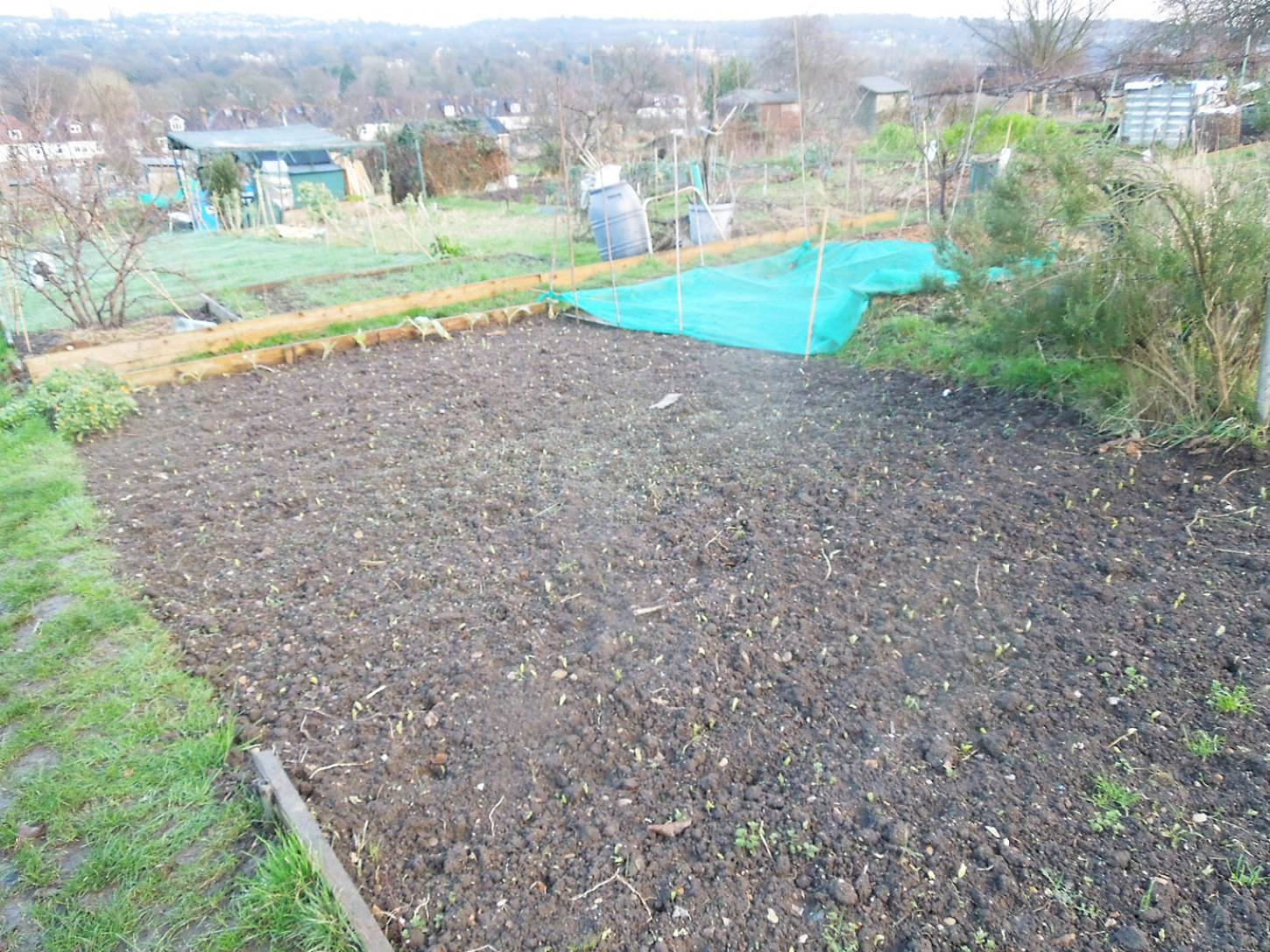 allotment review Jan. '17 - 4:10pm&nbsp;14<sup>th</sup>&nbsp;Jan.&nbsp;'17