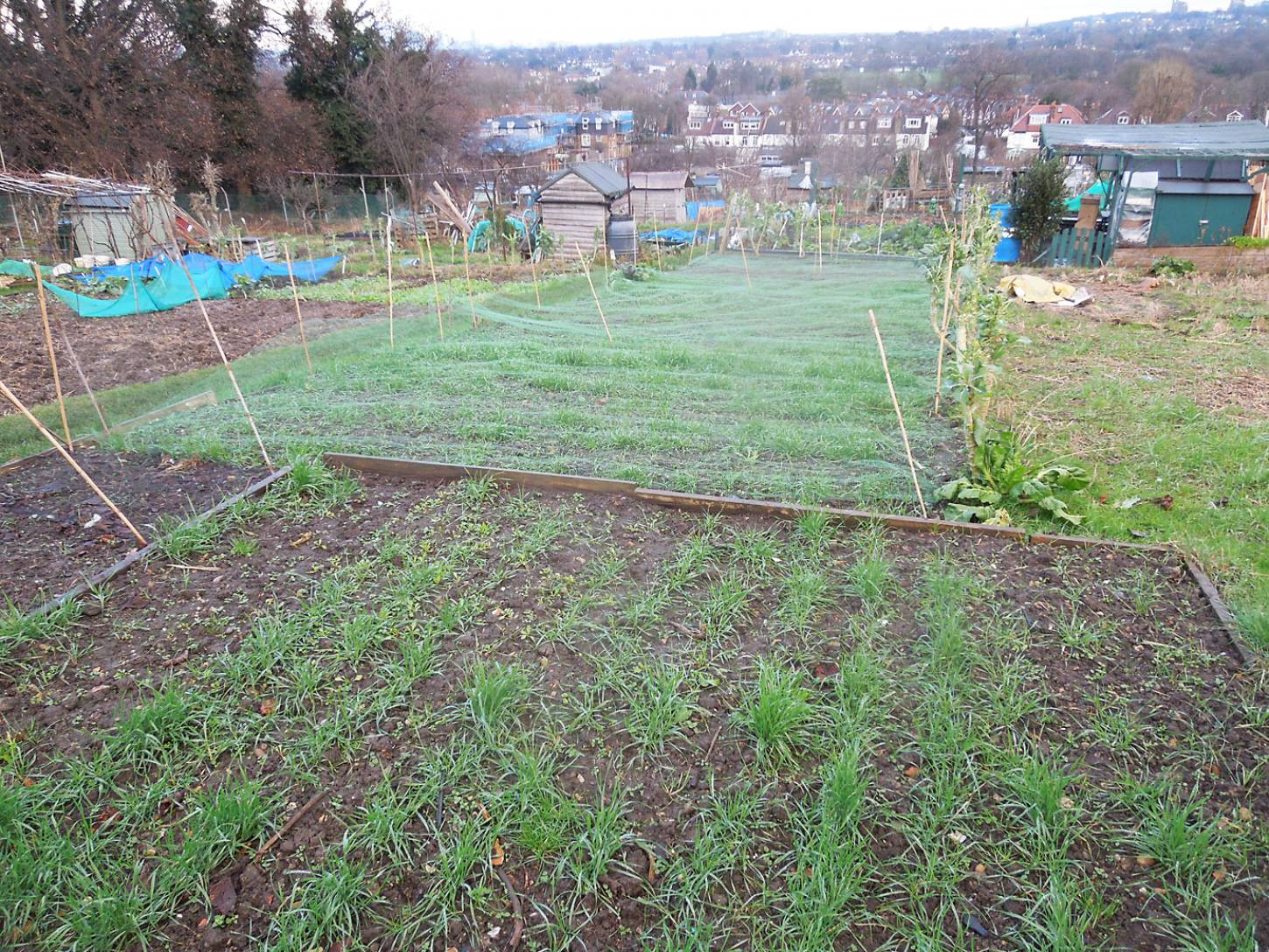 allotment review Jan. '17 - 4:06pm&nbsp;14<sup>th</sup>&nbsp;Jan.&nbsp;'17