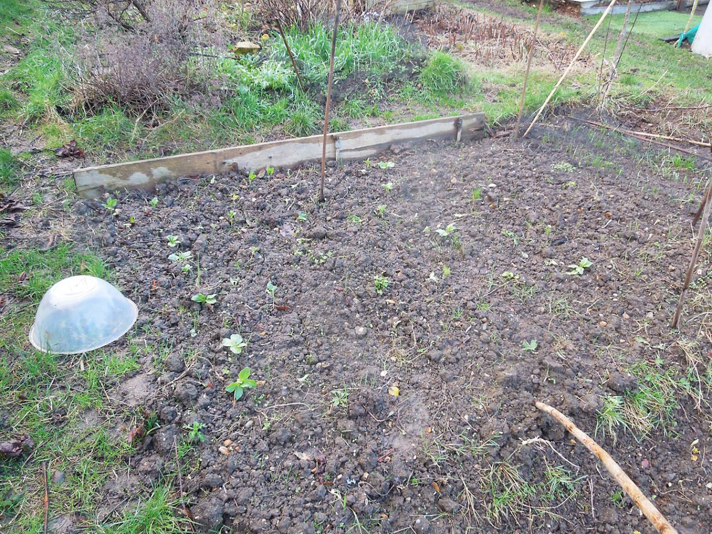 allotment review Jan. '17 - 4:07pm&nbsp;14<sup>th</sup>&nbsp;Jan.&nbsp;'17