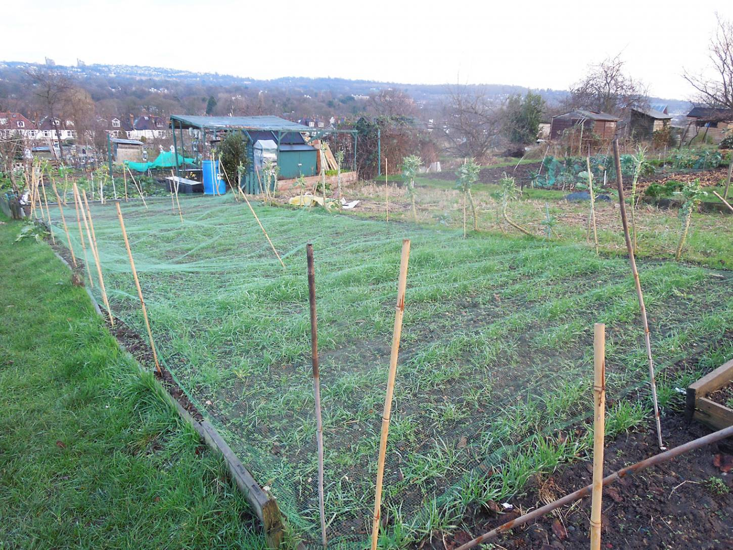 allotment review Jan. '17 - 4:09pm&nbsp;14<sup>th</sup>&nbsp;Jan.&nbsp;'17